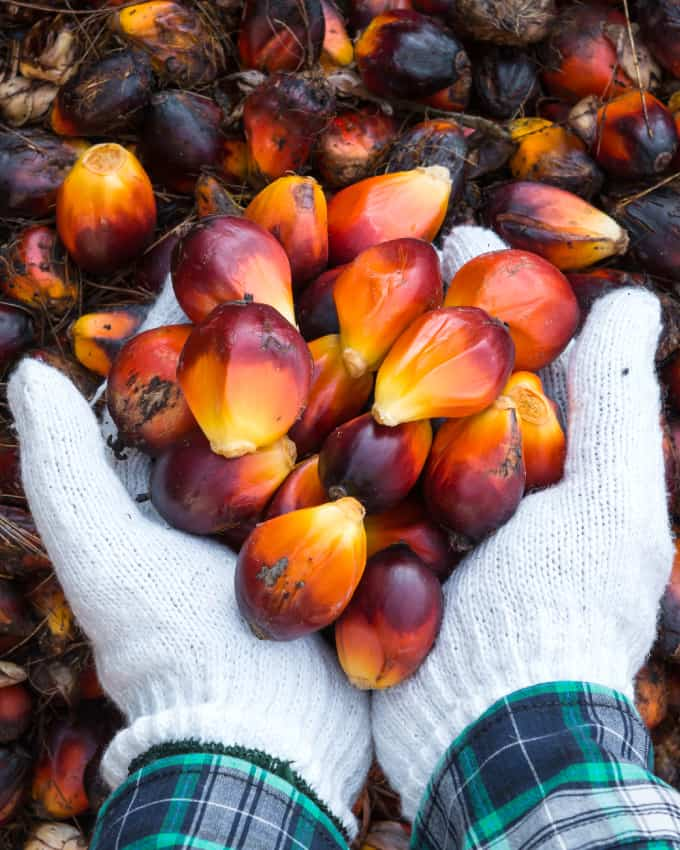 Addressing Sustainability Issues around Palm Oil